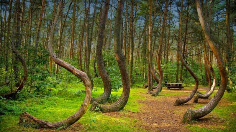 Image result for Hoia Baciu Forest in Romania